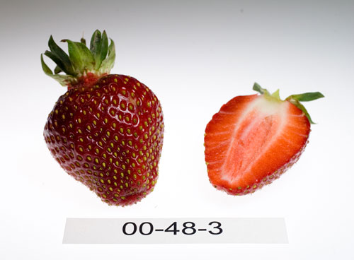 Photo: strawberry number 00-48-3