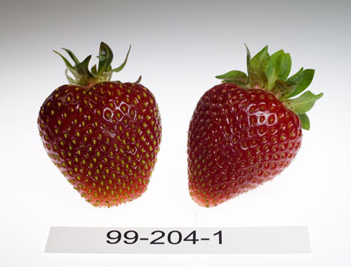 Photo: strawberry number 99-204-1